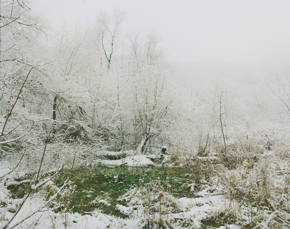 Winter Forrest From Beast by the Waterfall Guesthouse © Wenxin Zhang