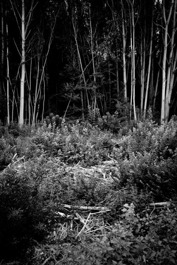 #Terre de Banlieue ©Pascal Riviere