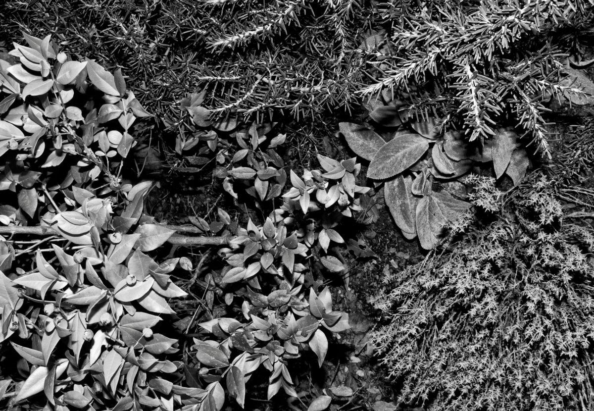 Ten Mediterranean Plants © J. Benassi