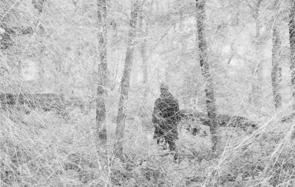 © Amani Willett