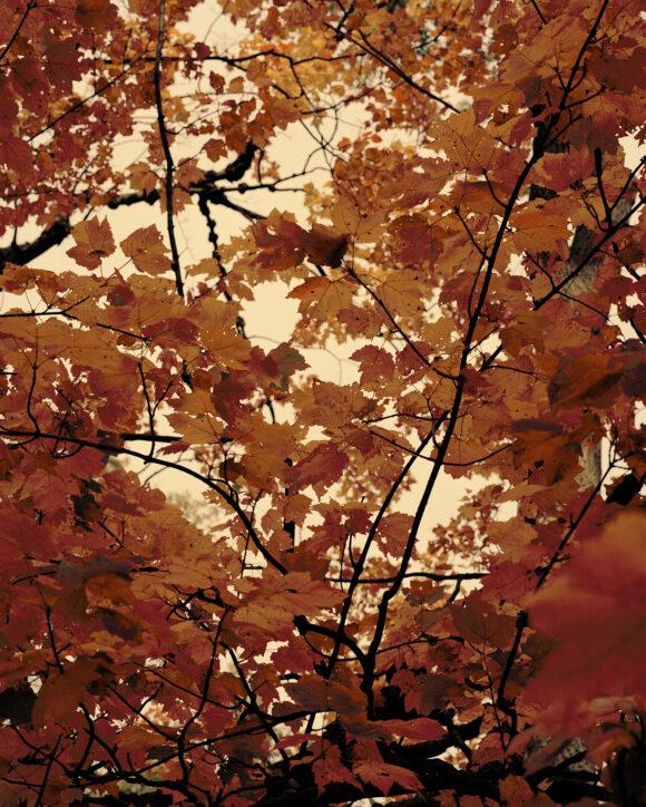 "Fall Spectrum from ""Strangerintwoworlds"" by Brendan George Ko"