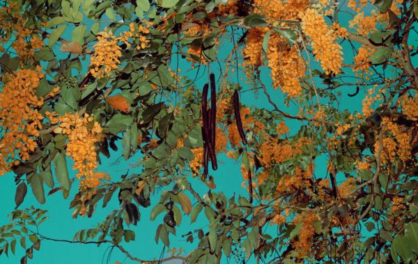 Goldtree from Strangerintwoworlds by Brendan George Ko