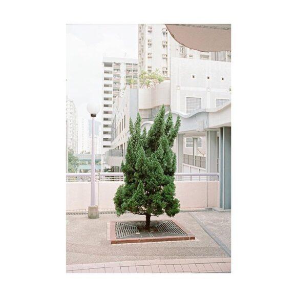 Samuel Siu- Instagram- FE2