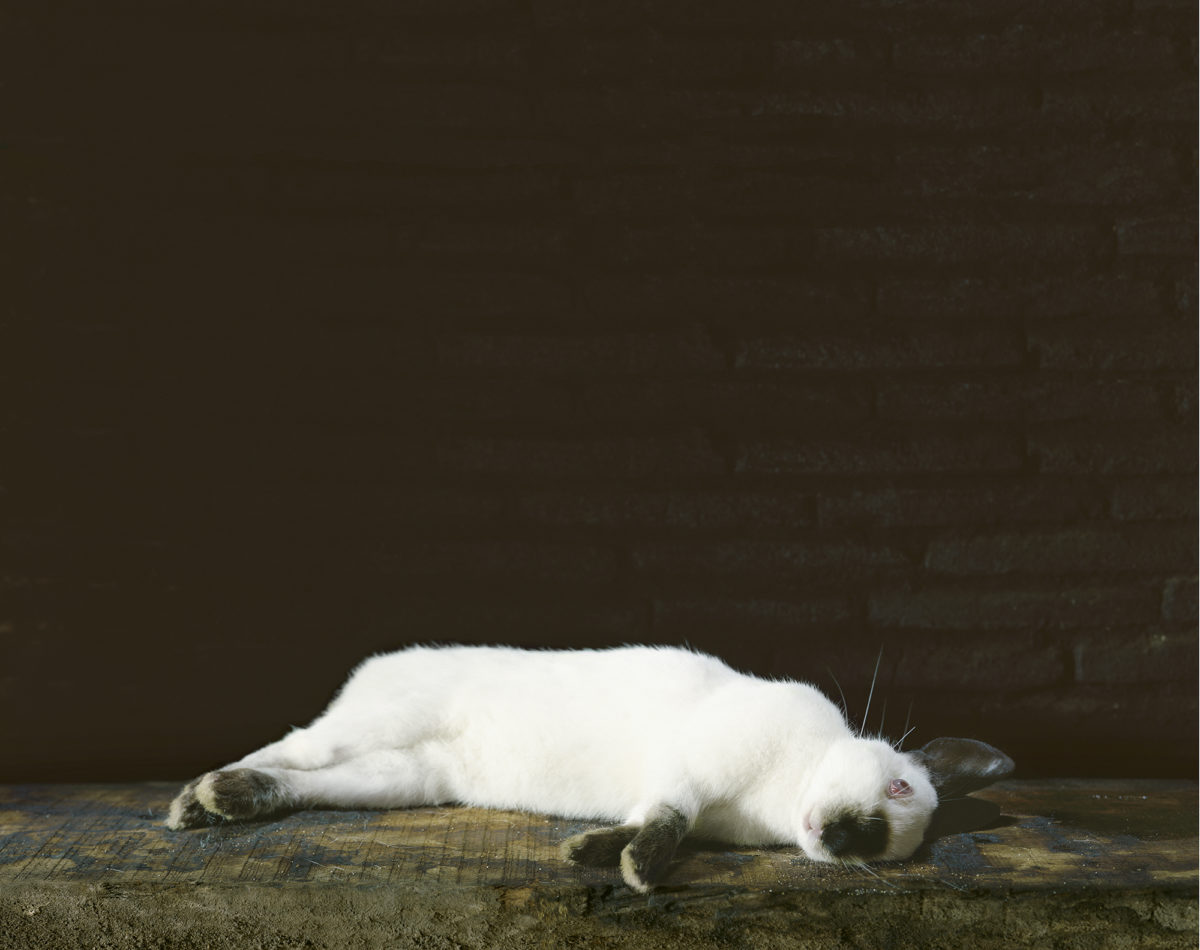 Le lapin mort, série « Les Natures mortes », 2007 © Véronique Ellena
