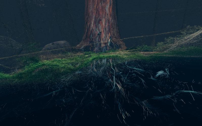 Treehugger_Wawona_06