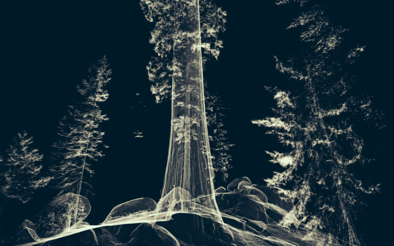 Treehugger_Wawona_21