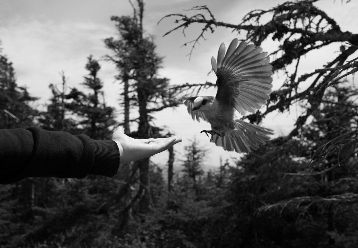 © Louis Perreault