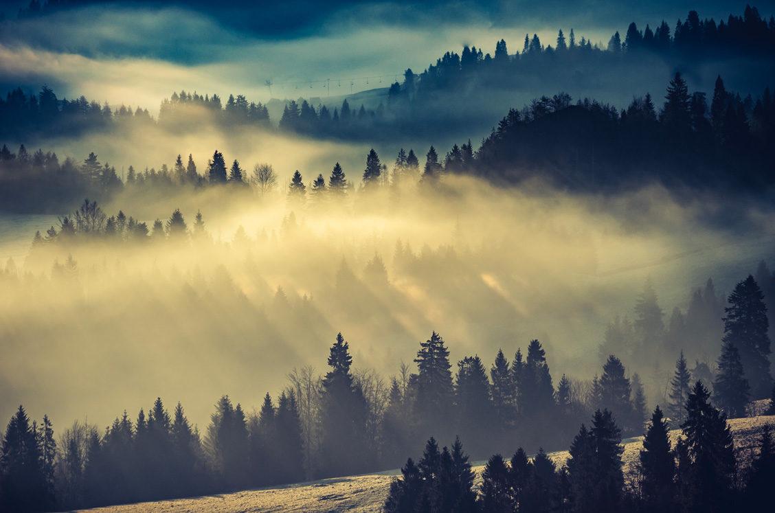 © Shutterstock / Tomasz Mazon.