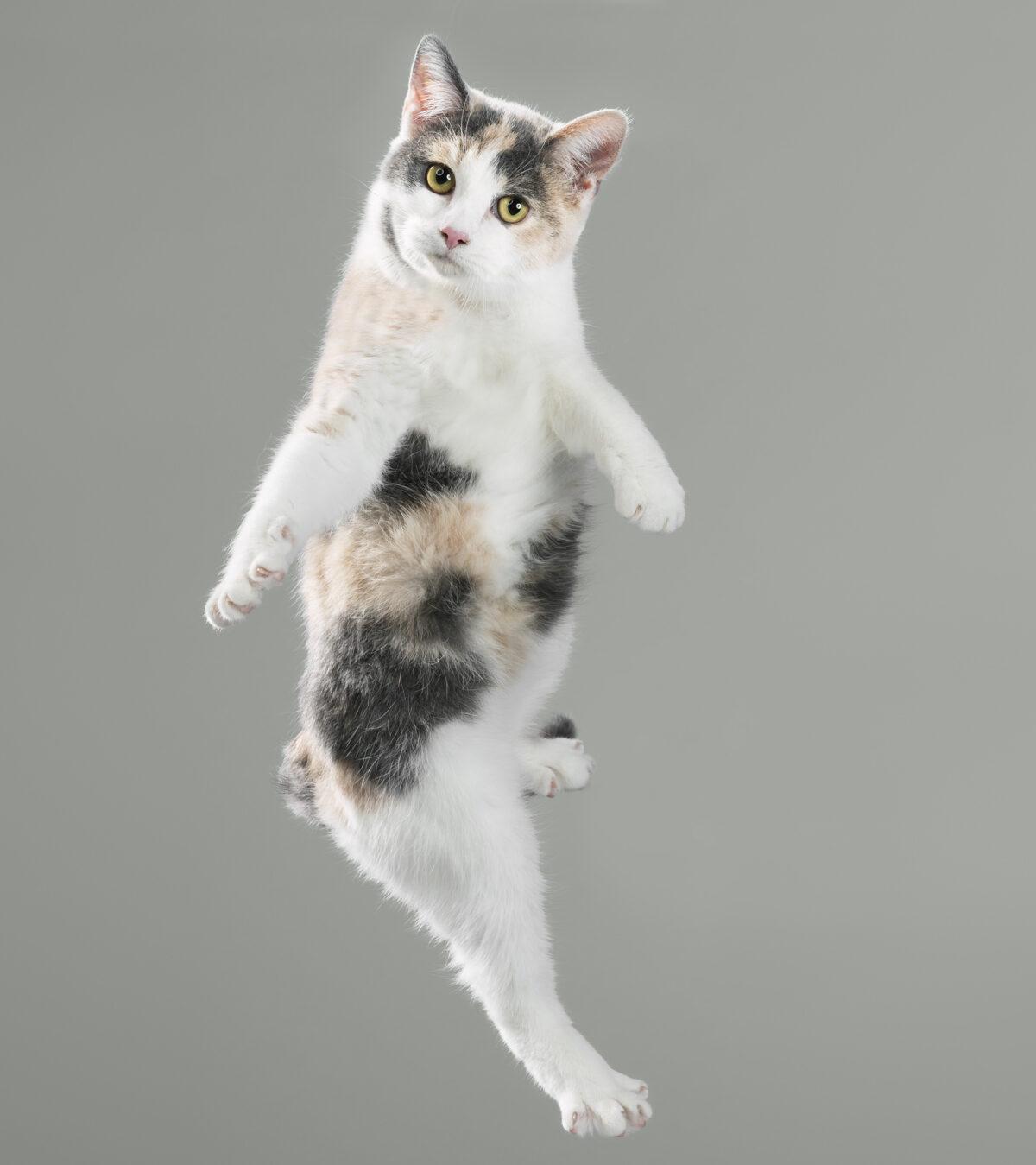 katzenbabys bilder kostenlos  ausmalbilder