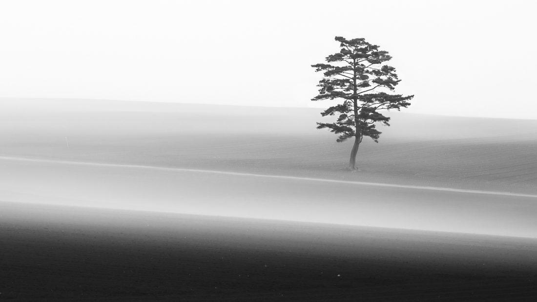 © Aya Iwakasi