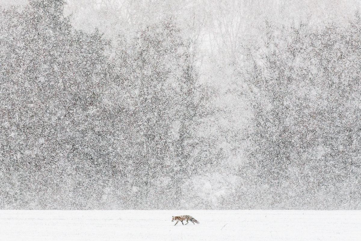 © Etienne Francey
