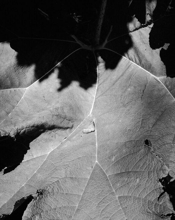 © Maria Baoli