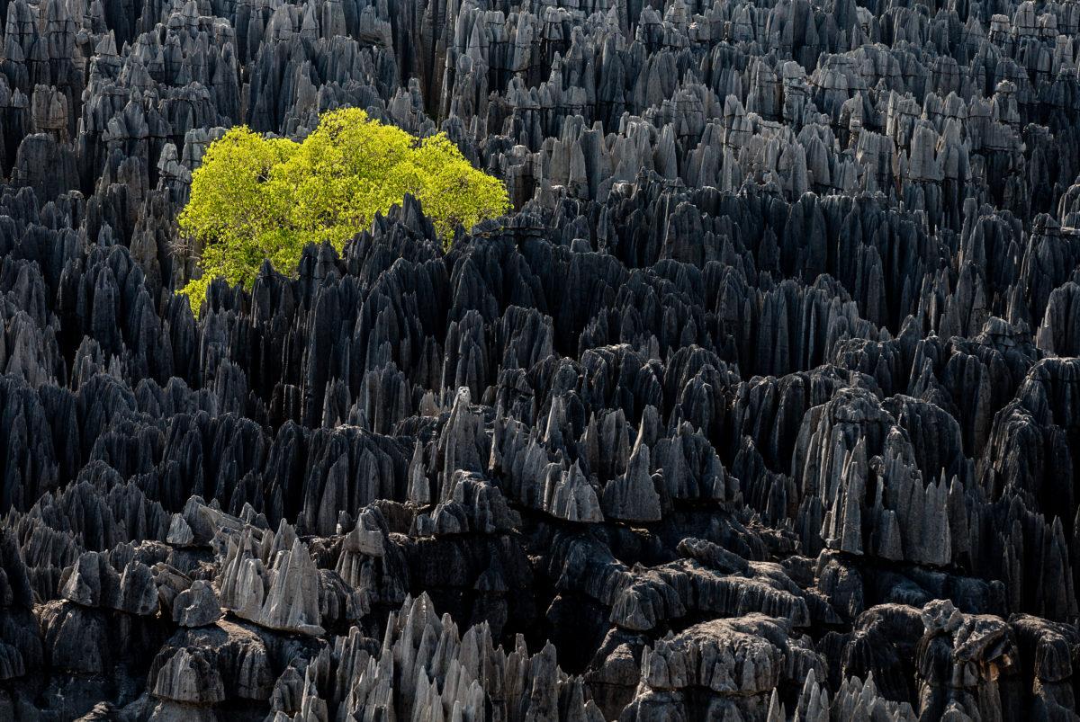 © Yann Arthus-Bertrand