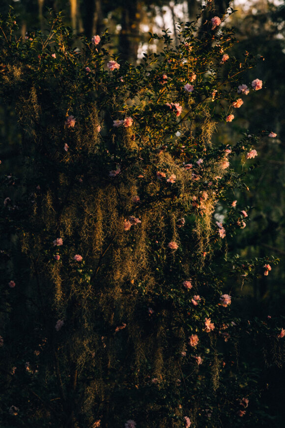© Robbie Lawrence, du livre Blackwater River publié par les éditions Stanley Barker