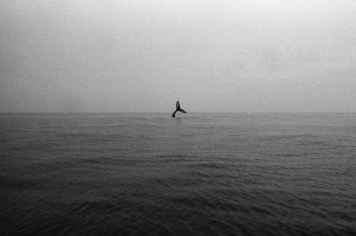 © Jonathan Levitt