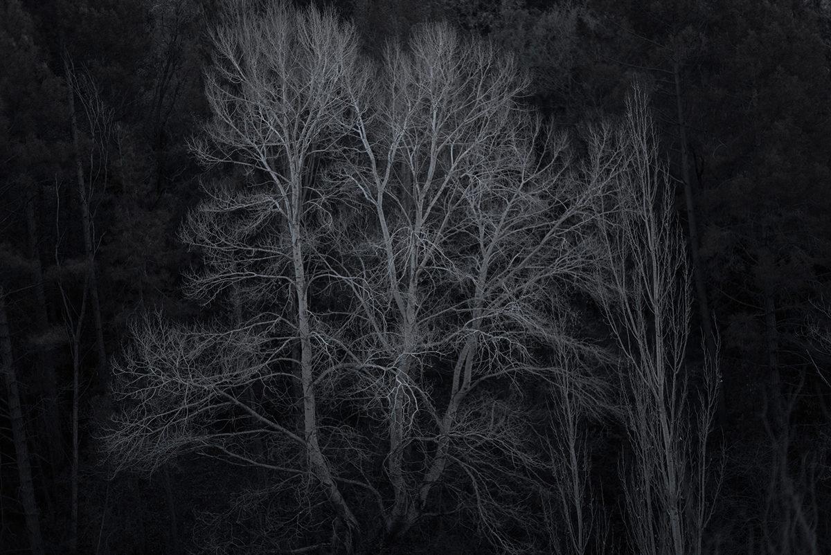 © Joan Alvado