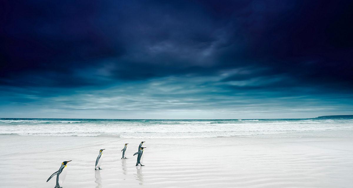 © Stanley Leroux