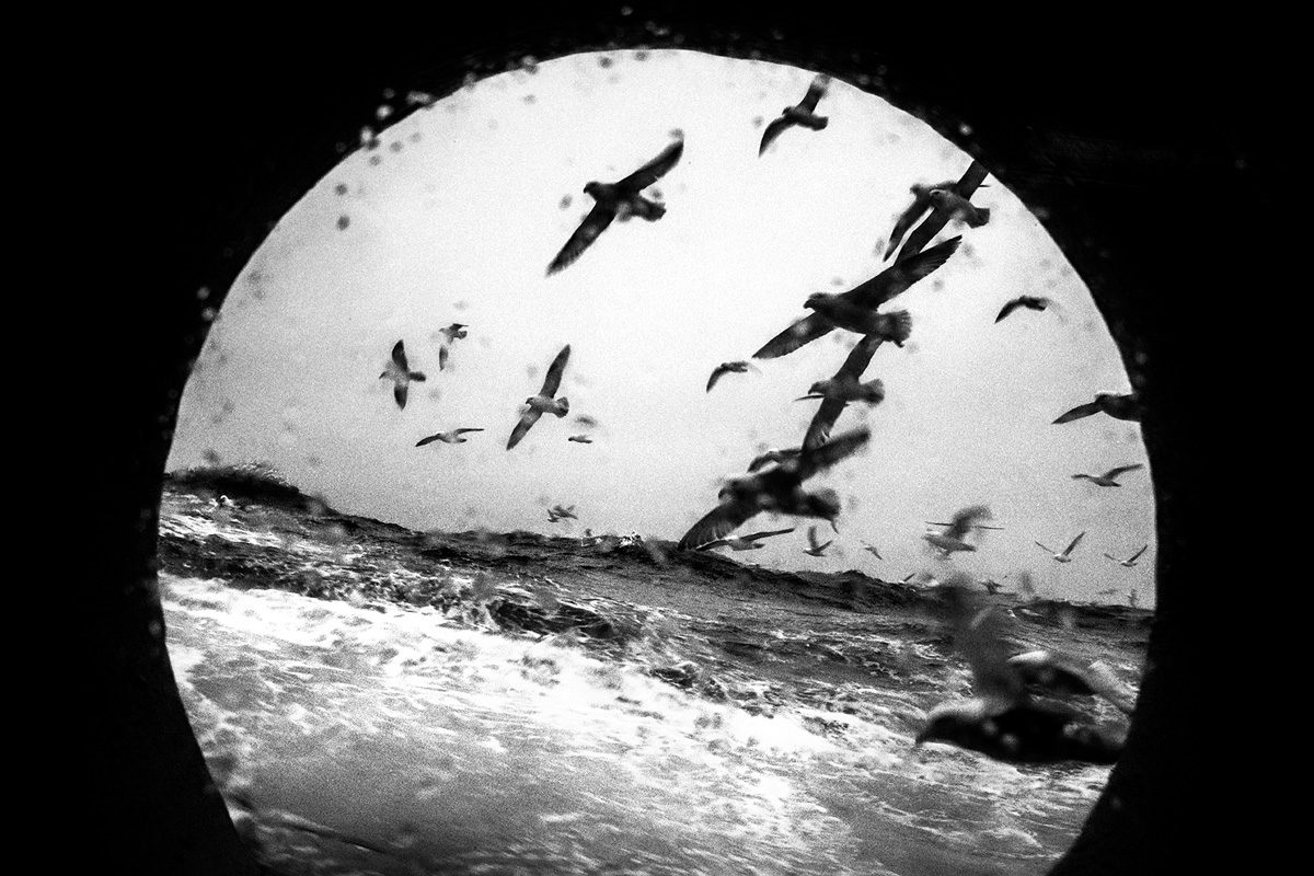 © Pierre Vanneste
