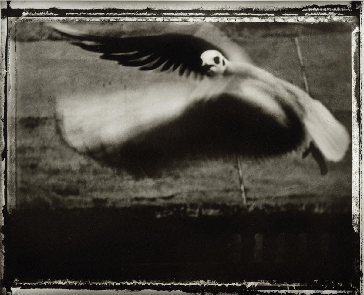 © Sarah Moon