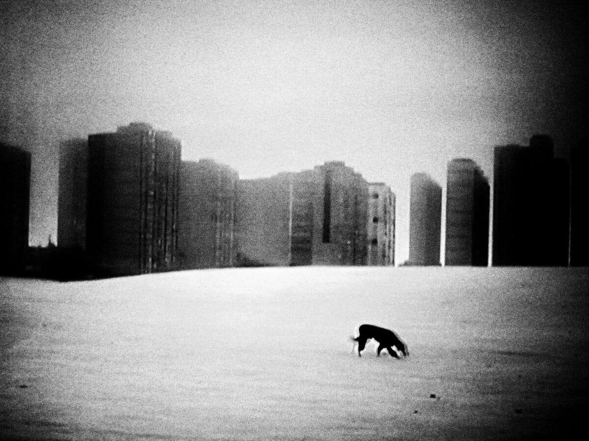 © Makis Makris