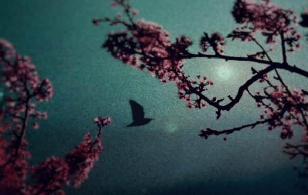© Celine