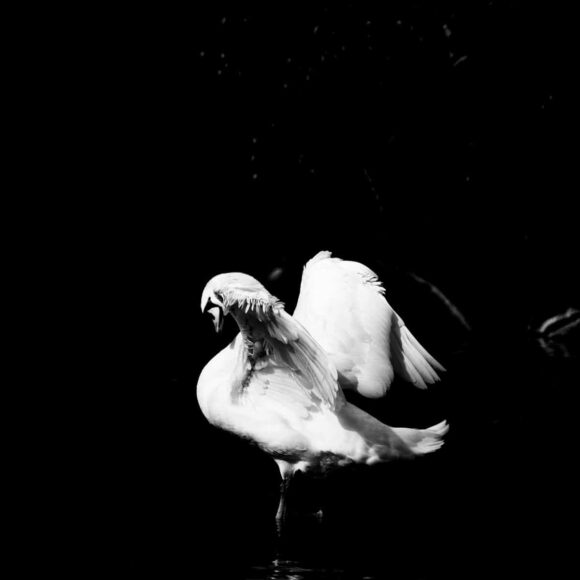 © Sven Forsans