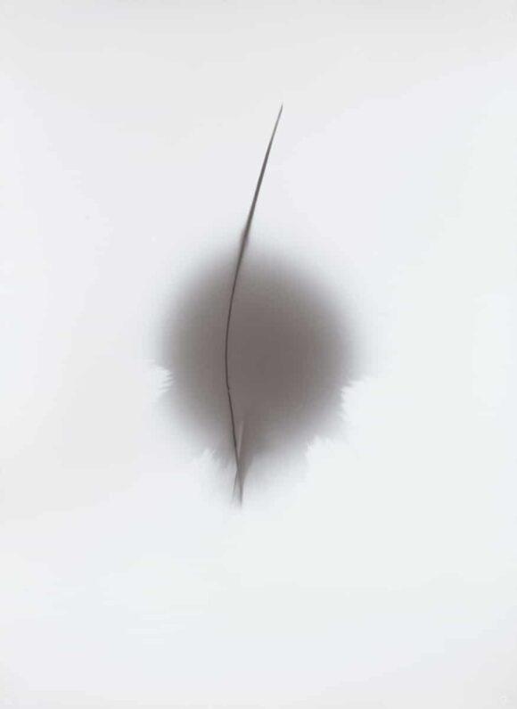 Thomas-Paquet_2_Courtesy-Galerie-Thierry-Bigaignon
