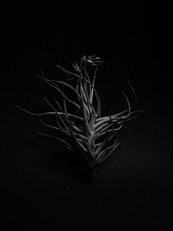 Coline-Jourdan_Prix-Phootgraphie-et-sciences
