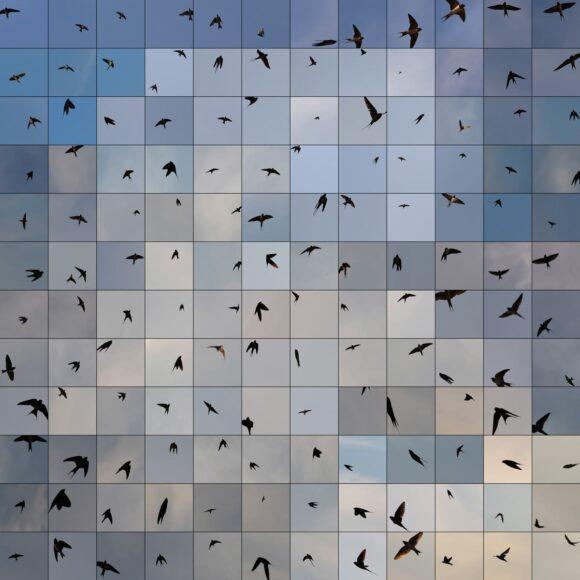 © Edouard Taufenbach Régis Campo